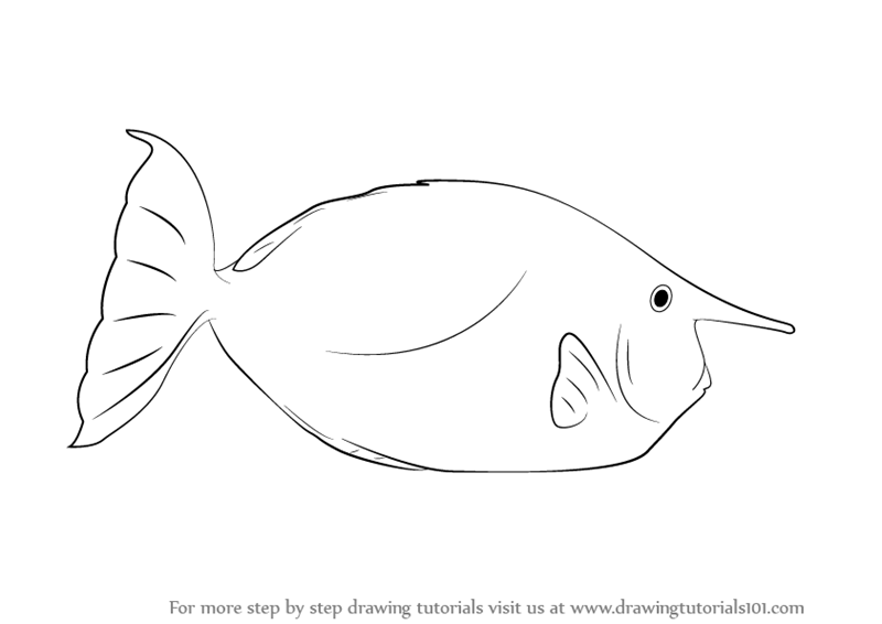 learn how to draw a whitemargin unicornfish fishes step