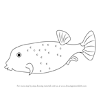 How to Draw a Yellow Boxfish