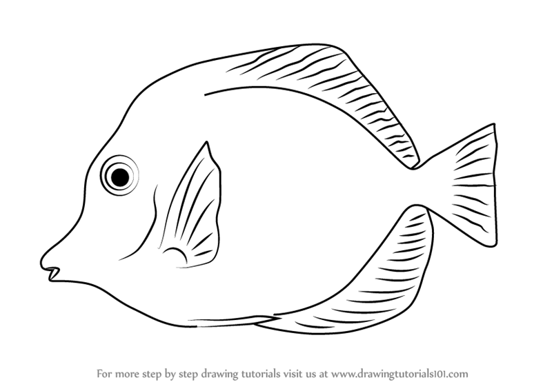 yellow tang coloring pages - photo #4