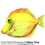 How to Draw a Yellow Tang