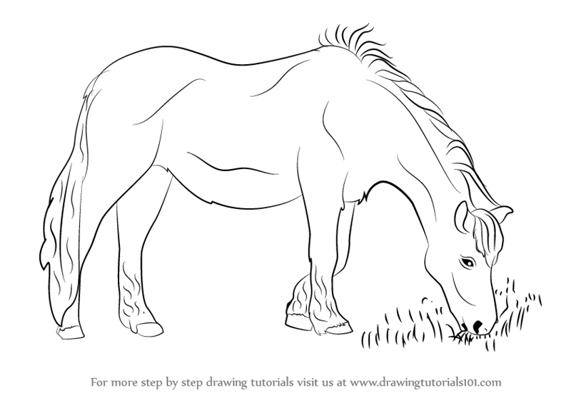 Learn how to draw a horse eating grass horses step by step drawing tutorials