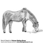 Horse Eating Grass Pencil Sketch