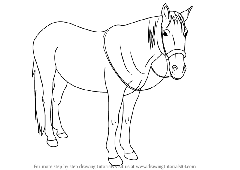 Learn How to Draw Standing Horse (Horses) Step by Step ...