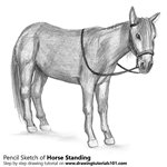 How to Draw Standing Horse