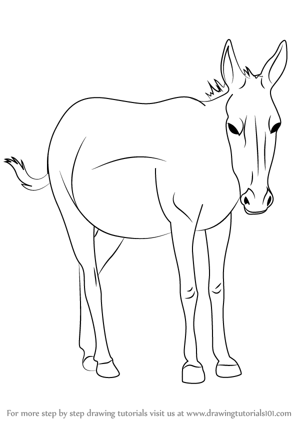 Learn How to Draw an Onager Horses