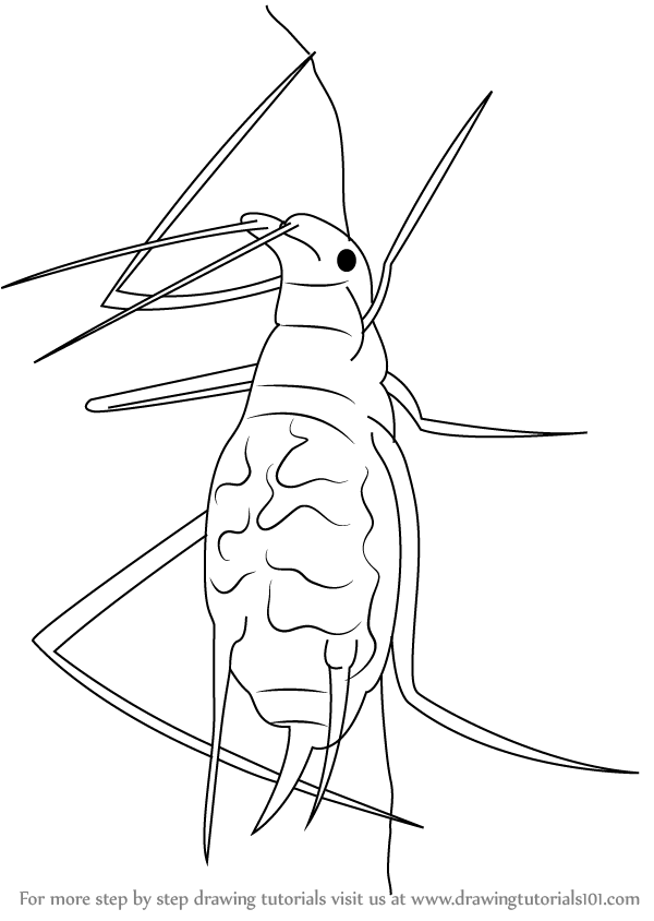 Learn How To Draw A Aphid Insects Step By Step Drawing Tutorials