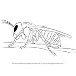 How to Draw a Asian Giant Hornet