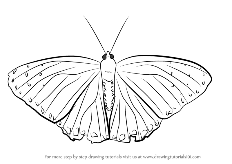 Learn How To Draw A Beautiful Butterfly Insects Step By Step