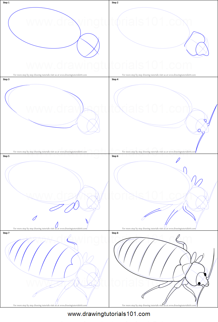 how to draw a bed bug printable step by step drawing sheet
