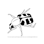 How to Draw a Bee Beetle