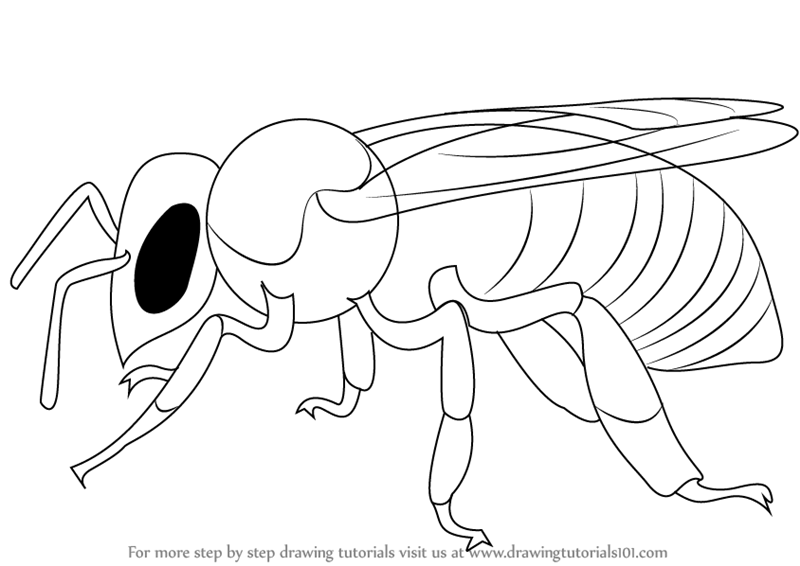 Learn How To Draw A Bee Insects Step By Step Drawing Tutorials