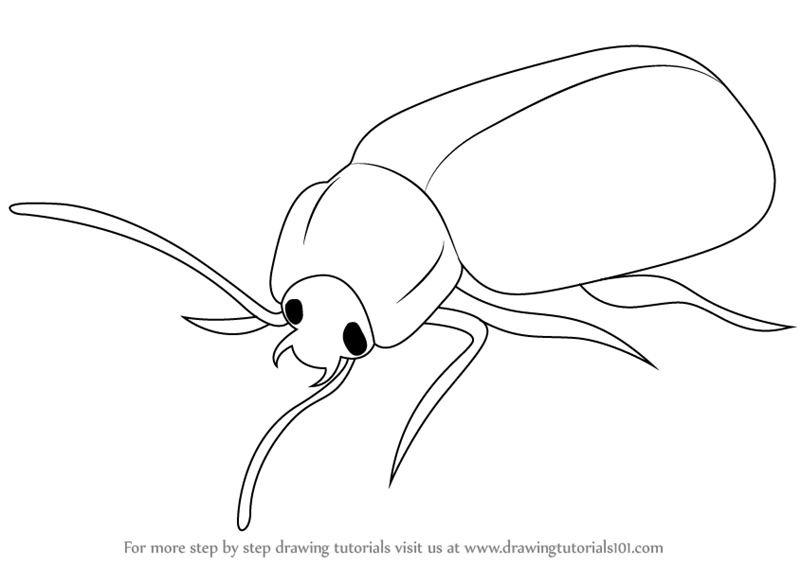 learn how to draw a beetle insects step by step drawing tutorials