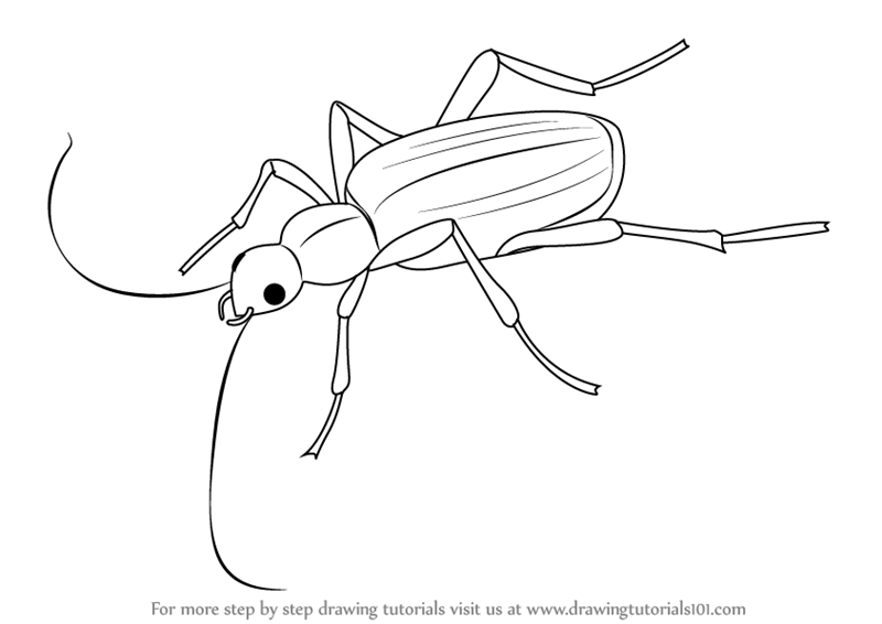 learn how to draw a bombardier beetle insects step by step