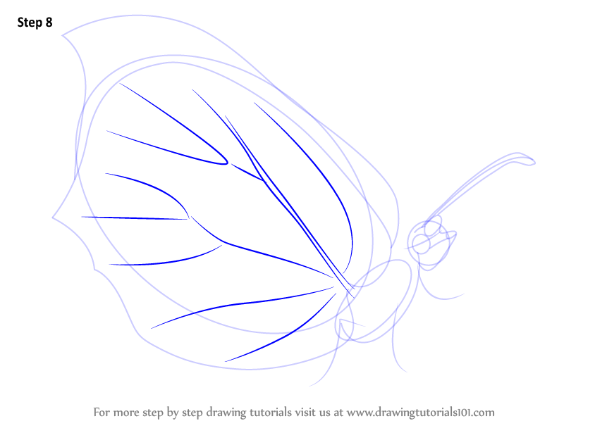 how to draw a butterfly step by step video