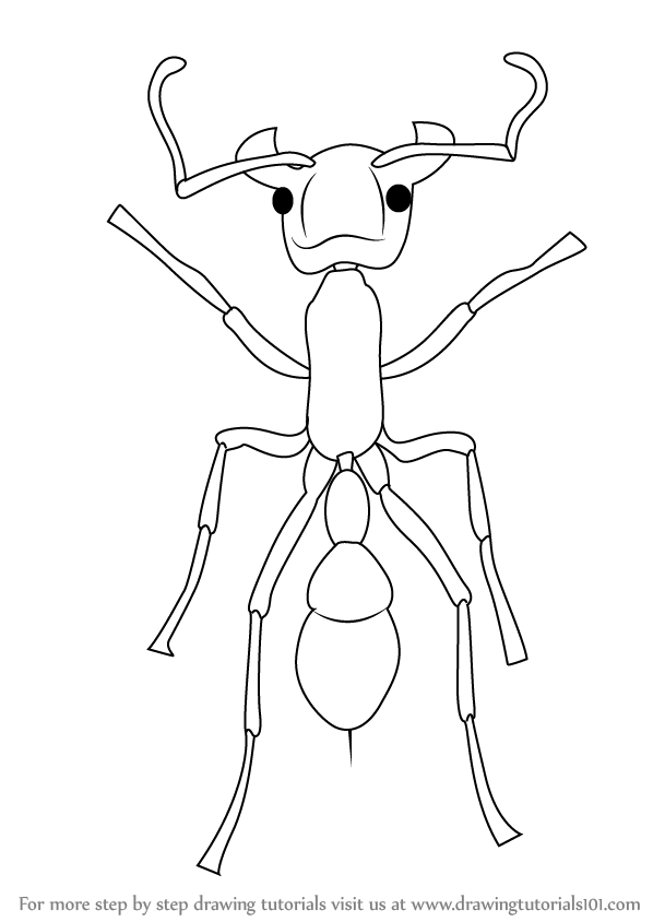 Learn How to Draw a Bullet Ant (Insects) Step by Step
