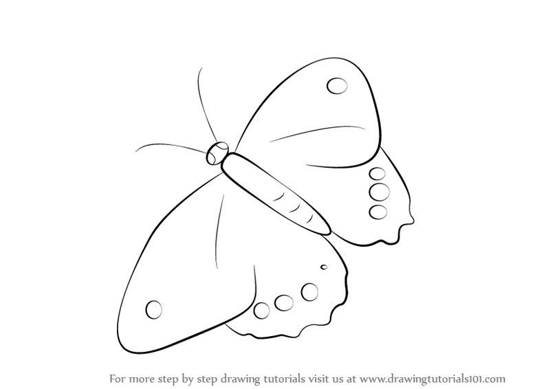 Learn how to draw a butterfly insects step by step drawing tutorials