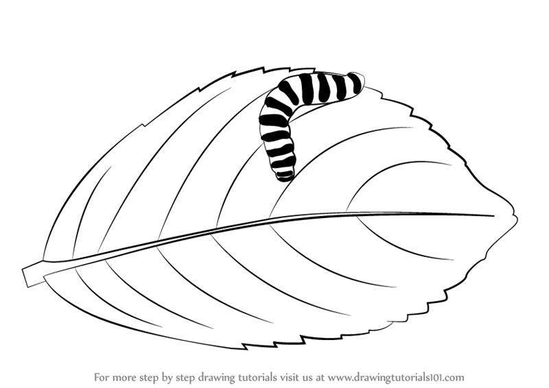 Learn how to draw a caterpillar on a leaf insects step by step drawing tutorials
