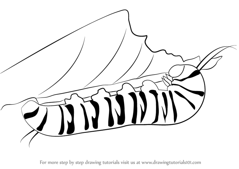 Learn how to draw a caterpillar insects step by step drawing tutorials