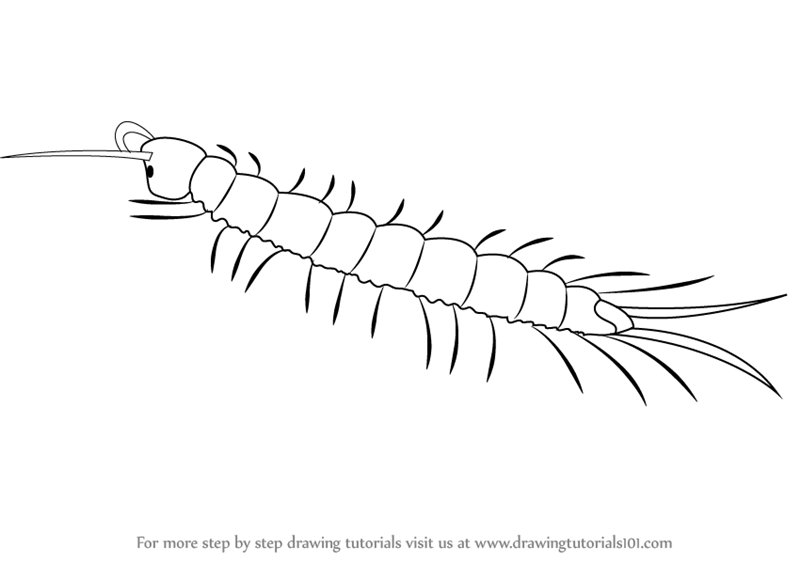 learn how to draw a centipede  insects  step by step