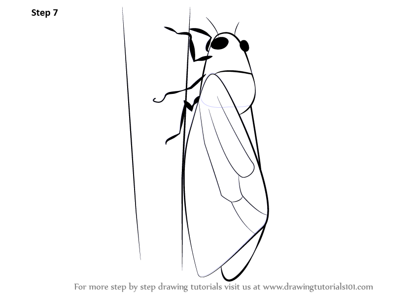 Learn How To Draw A Cicada Insects Step By Step