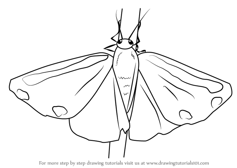 Gallery For gt Moth Drawing Simple