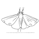 How to Draw a Cinnabar Moth
