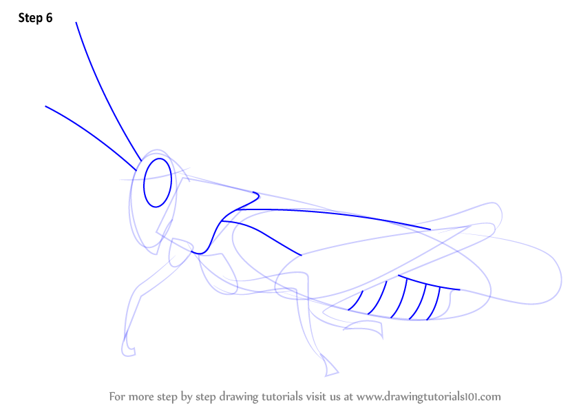Learn how to draw a cricket insects step by step for How to make doodle art