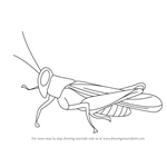 How to Draw a Cricket