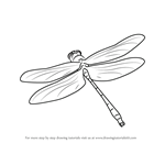 How to Draw a Dragon Fly in Flight