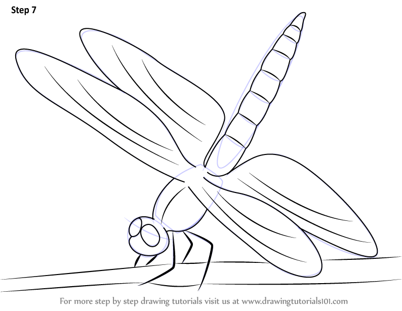 how to draw ans insect wing