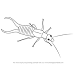 How to Draw a Earwig