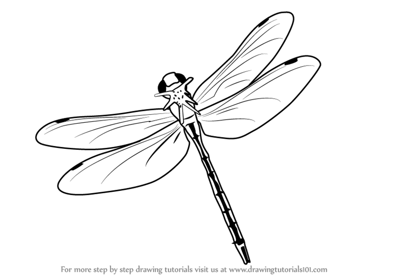 Dragonfly And Butterfly Tattoo Designs