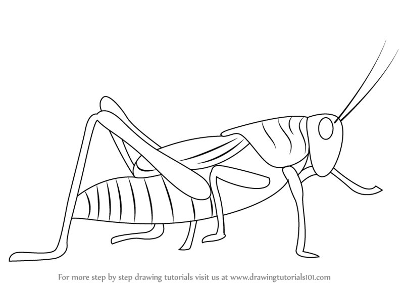 Learn how to draw a grasshopper insects step by step drawing tutorials
