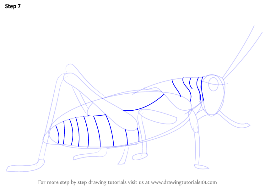 how to draw a grasshopper easily