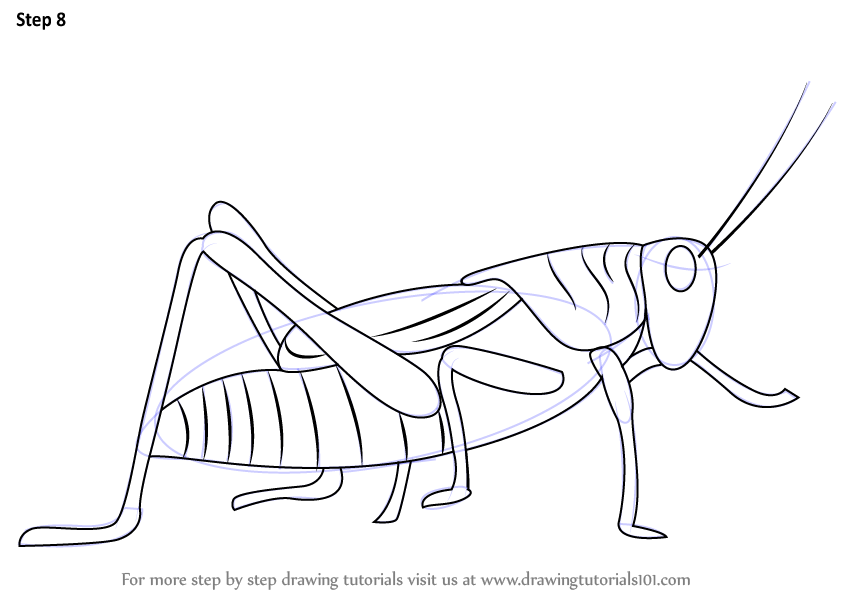 Learn How To Draw A Grasshopper Insects Step By Step