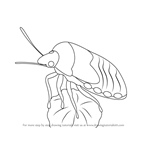 How to Draw a Hemiptera