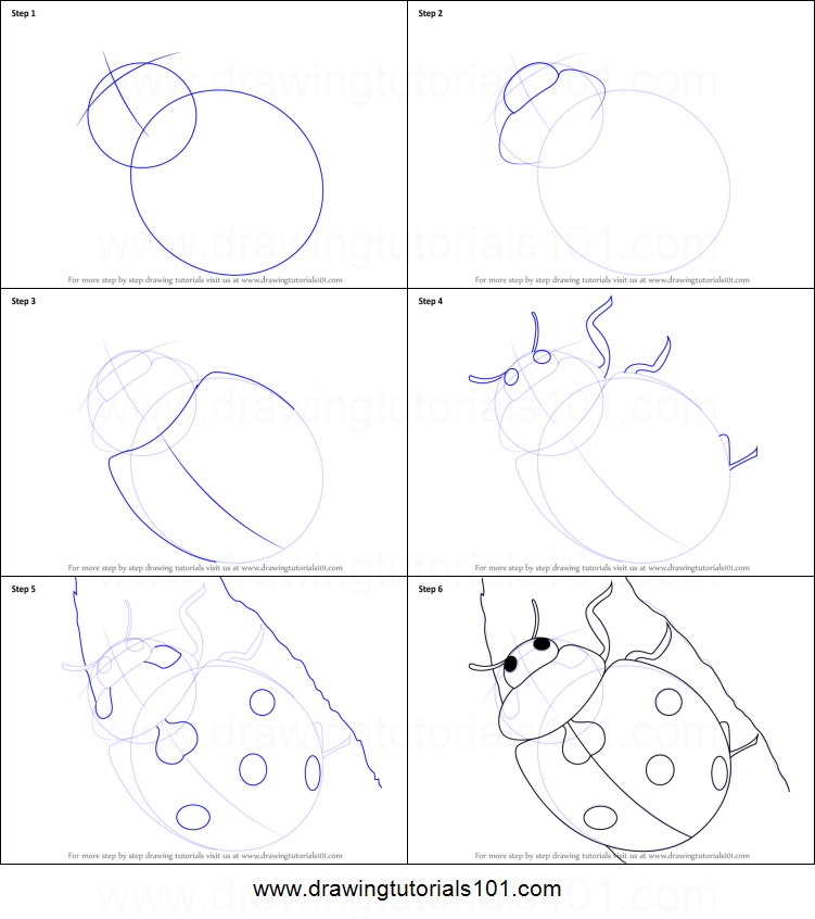 How to Draw a Ladybug printable step by step drawing sheet ...