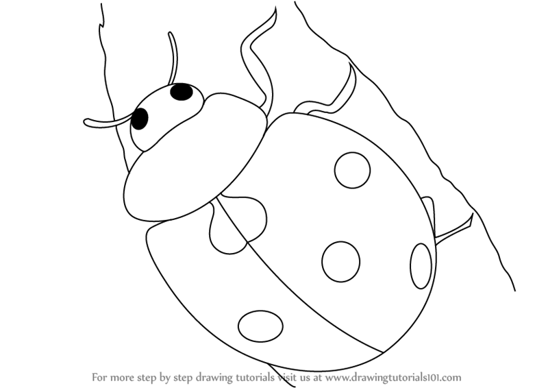 Lady Bug Drawing For Kids | www.imgkid.com - The Image Kid ...