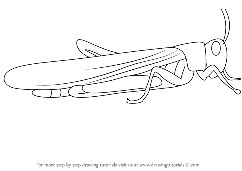 Learn How To Draw A Locust Insects Step By Step