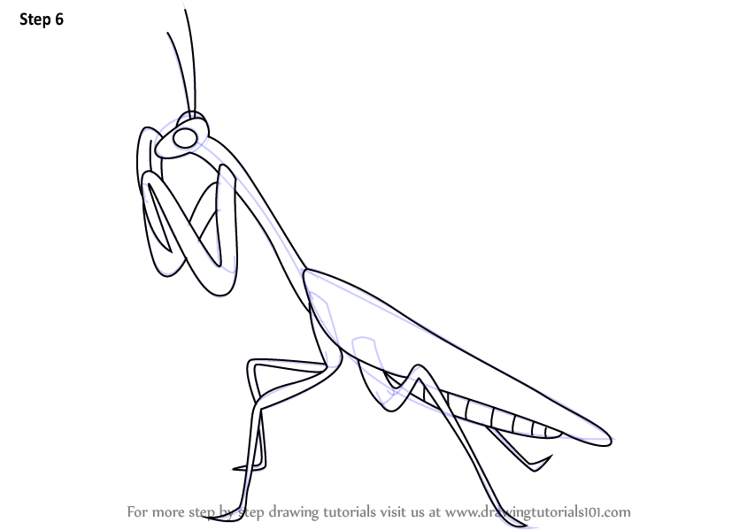 Learn How to Draw a Mantis Insects
