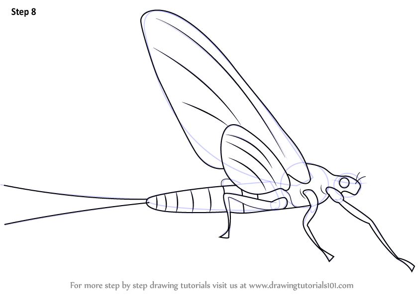 Step By Step How To Draw A Mayflies Drawingtutorials101 Com