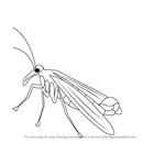 How to Draw a Mecoptera