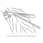 How to Draw an Orangeblack Hawaiian Damselfly