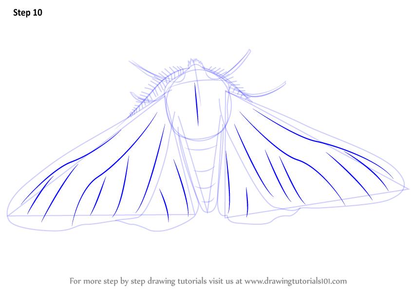 learn how to draw a peppered moth insects step by step