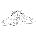 How to Draw a Peppered Moth