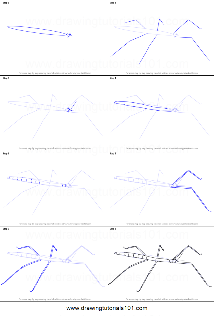 how to draw a stick insect printable step by step drawing sheet