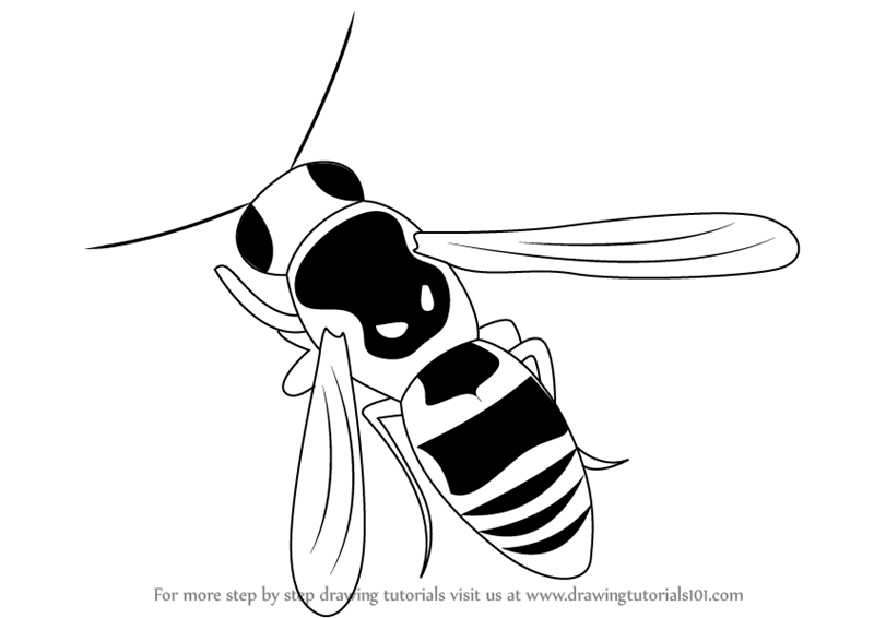 Learn Draw a Wasp (Insects) Step by Step : Drawing Tutorials