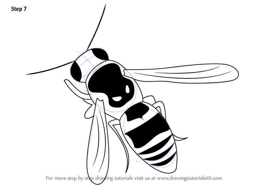 Learn How To Draw A Wasp Insects Step By Step Drawing Tutorials