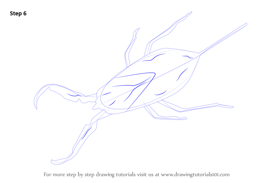Line Drawing Of Water Animals : Learn how to draw a water scorpion insects step by
