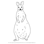 How to Draw a Wallaby